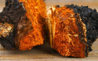 chaga-mushroom-stock-400x250 Biohacker Blog