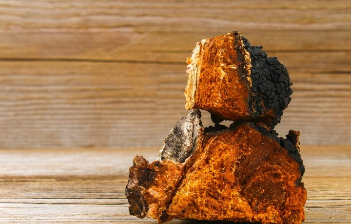 chaga-mushroom Health Benefits of Chaga Mushrooms