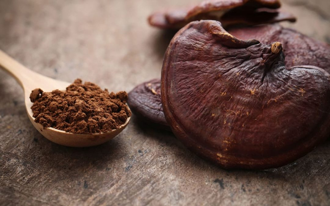 The Benefits of Shroomunity Reishi Mushroom Extract