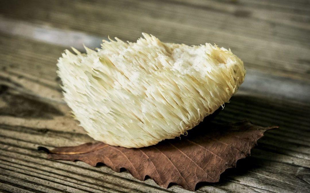 Useful Properties Of Lion's Mane Mushroom